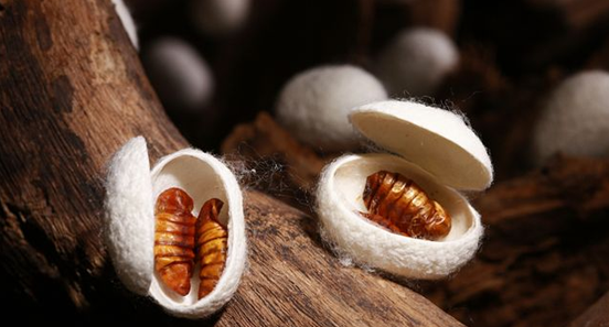 Choose the cocoon of double palace silkworm